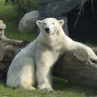 Visit the Columbus Zoo and Aquarium!
