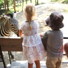 Feed the Zebras at Rolling Ridge Ranch in Millersburg, OH