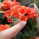 Family Fun Activity: Raise Butterflies