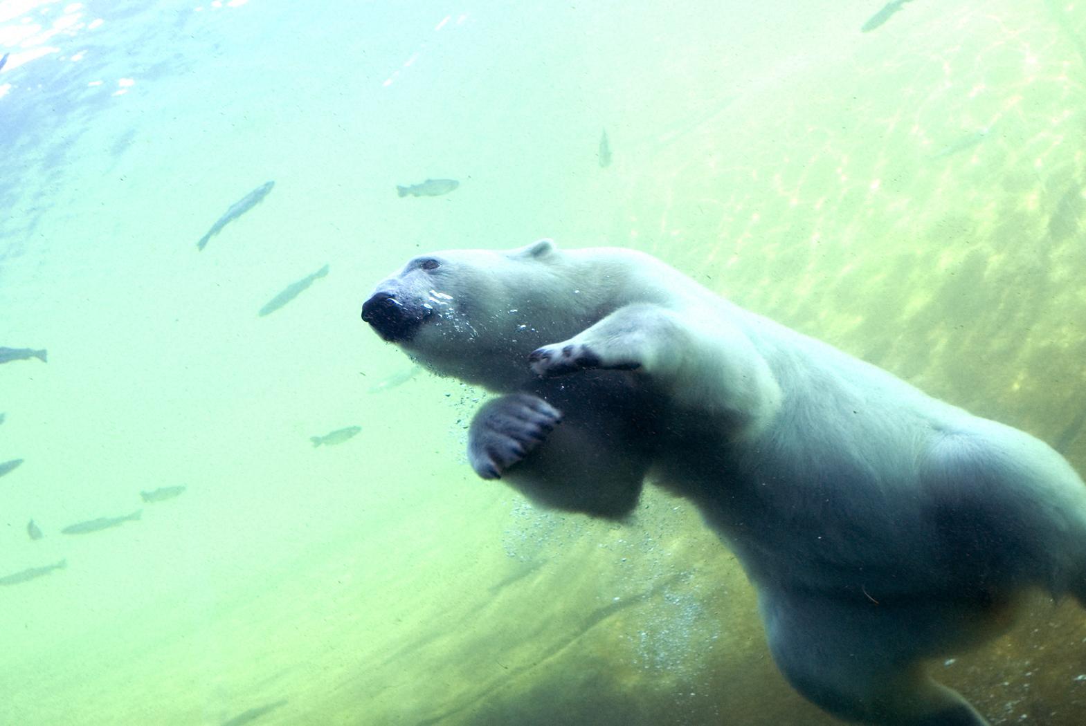 Visit The Columbus Zoo And Aquarium Cbus Mom